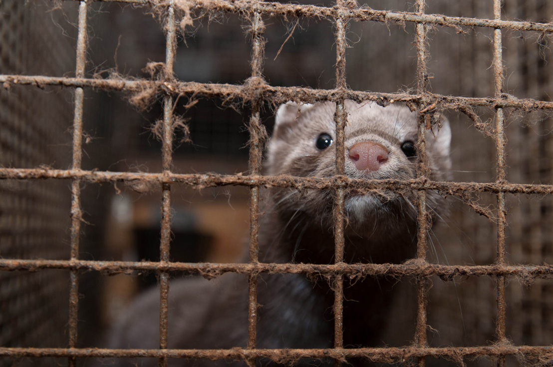 Ireland is officially banning fur farming