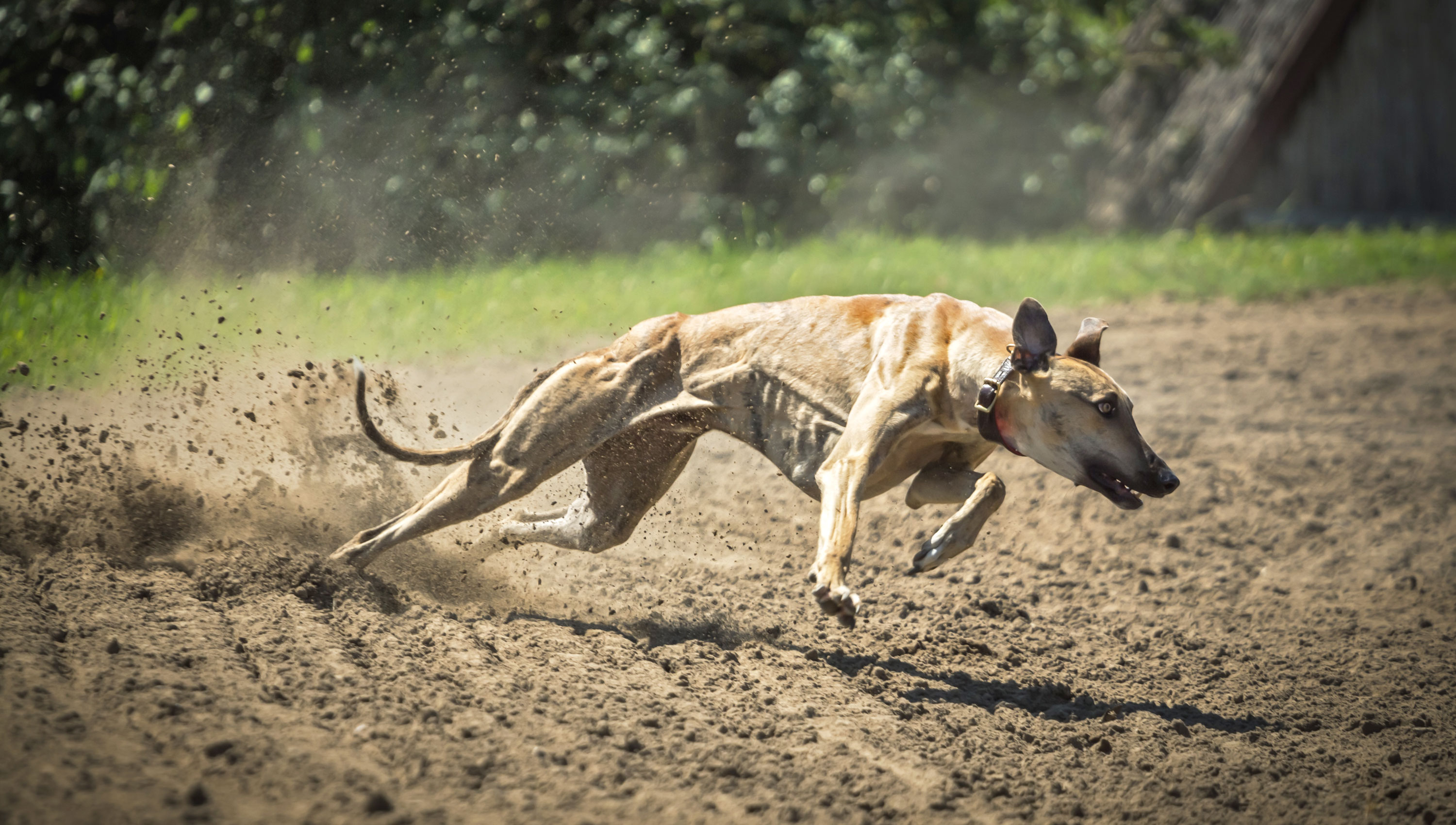 Stand with the greyhound six